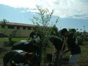 Operation Green Leaves' Team at CFBSF Tree planting